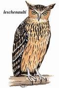 褐渔鸮 Brown Fish Owl